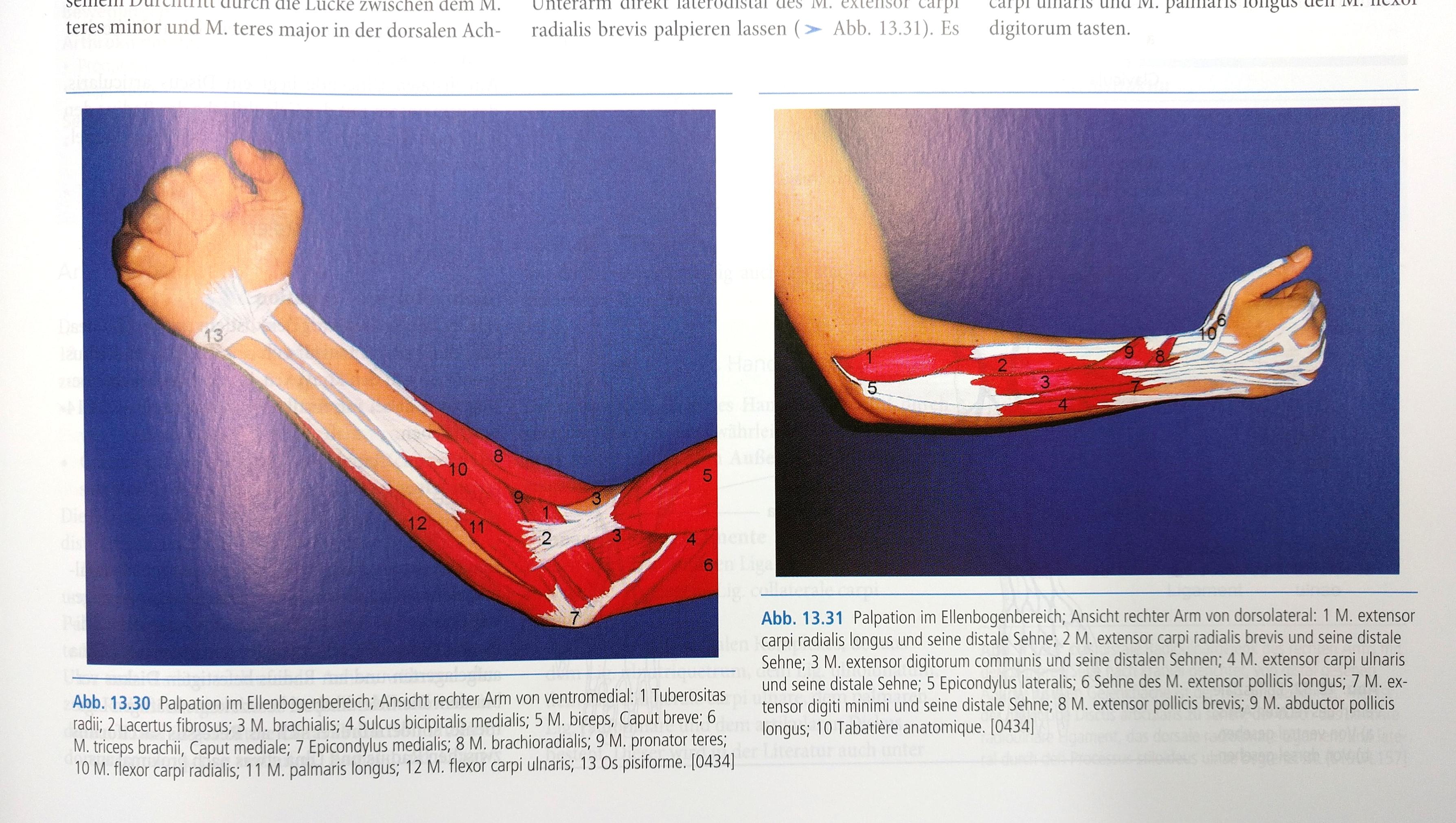Buchvorstellung: Anatomie - Physiologie für die Physiotherapie ...