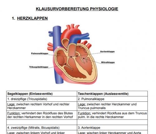 Anatomie - Physiowissen.de | Physiotherapie Portal & Forum